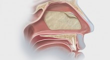 Nasoseptal Flap Illustration