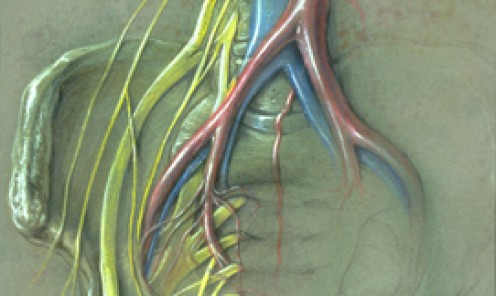 Sacral Nerve Plexus