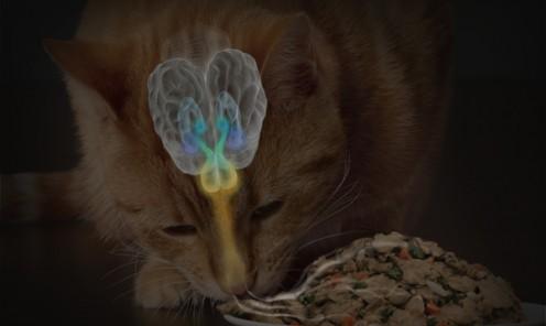 Feline Olfactory System