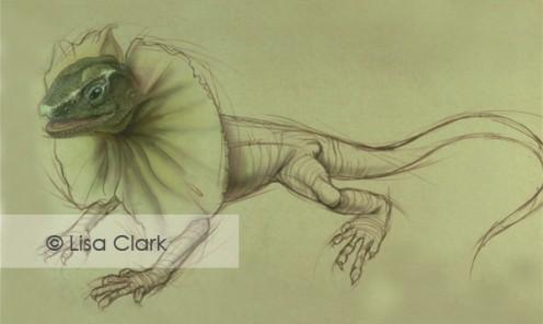 Frill Neck Lizard © Lisa A. Clark