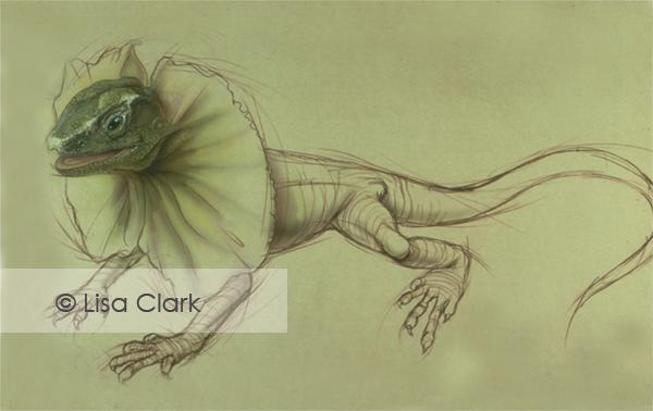 Frill Neck Lizard